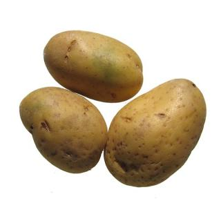 "Kartoffeln ""Talent"" mehlig kochend"