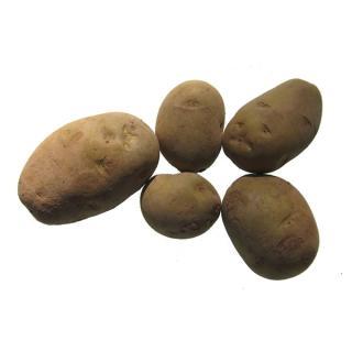 "Kartoffeln ""Jelly"" vorwiegend festkochend"