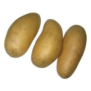 "Kartoffeln ""Talent"" mehligk., Sack 12,5kg"