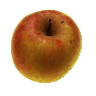 Apfel | Boskoop