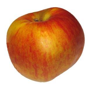 """Apfel """"Santana"""""""