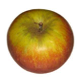 Apfel | Holsteiner Cox