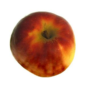 Apfel | Elstar